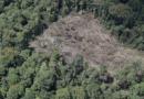 Sustitución de cultivos de coca una apuesta de los campesinos tumaqueños