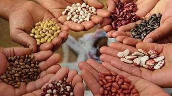 Temporada de siembras inicia con alerta por semillas de mala calidad