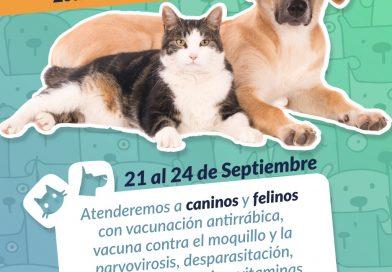 Del 21 al 24 de septiembre, 'El Guardián' atenderá gratis a perros y gatos